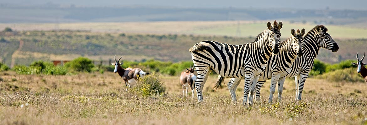 Escorted Tours South Africa