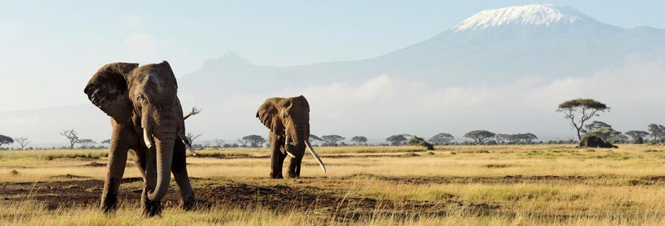 Safari Holidays with Kuoni