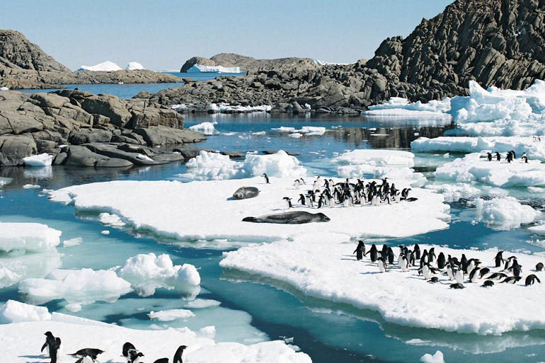 Seals and Adelie penguins