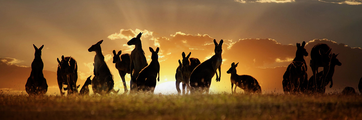 Experience Australia and New Zealand with AAT Kings