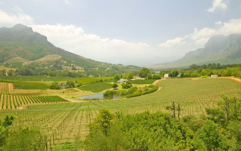 Vineyards along wine route