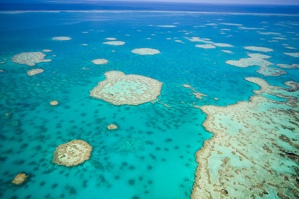 an introduction to the beauty of coral reefs in australia The great barrier reef, the world's largest coral reef ecosystem, stretches  it is  managed by the great barrier reef marine authority to ensure that its beauty is.