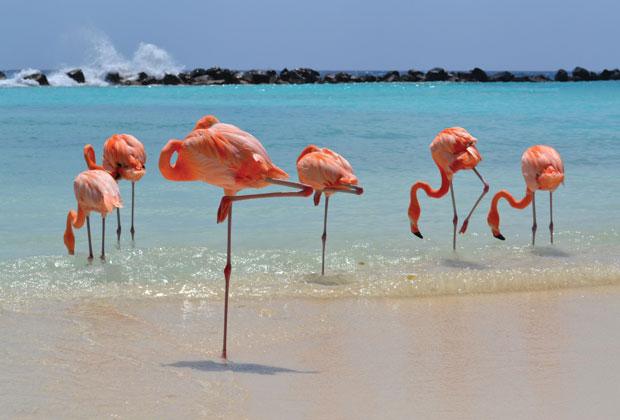 What makes Aruba so happy? - Kuoni Travel