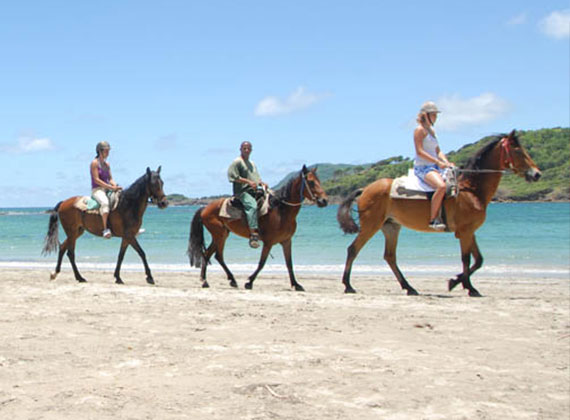 Horseriding in Antigua