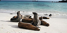 A zoologist's guide to the Galapagos