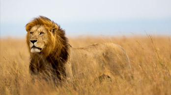 Visit Born Free's big cats in South Africa