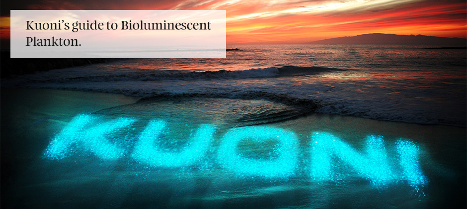 Bioluminescent Beach Maldives
