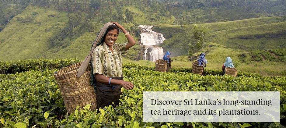 Tea culture in Sri Lanka