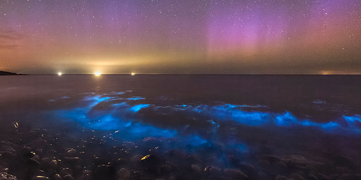 Bioluminescent Plankton under an aurora sky, Anglesey. © Kris Williams