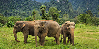 Ethical elephants: where to see these giants in Thailand
