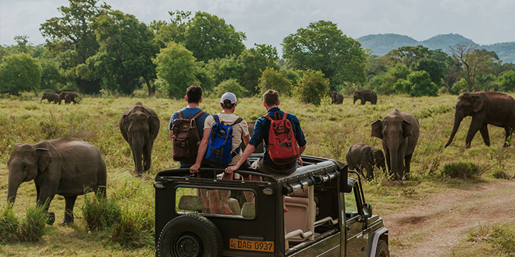 See the elephants on safari at Minneriya National Park