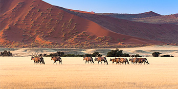 The ultimate guide to touring Namibia