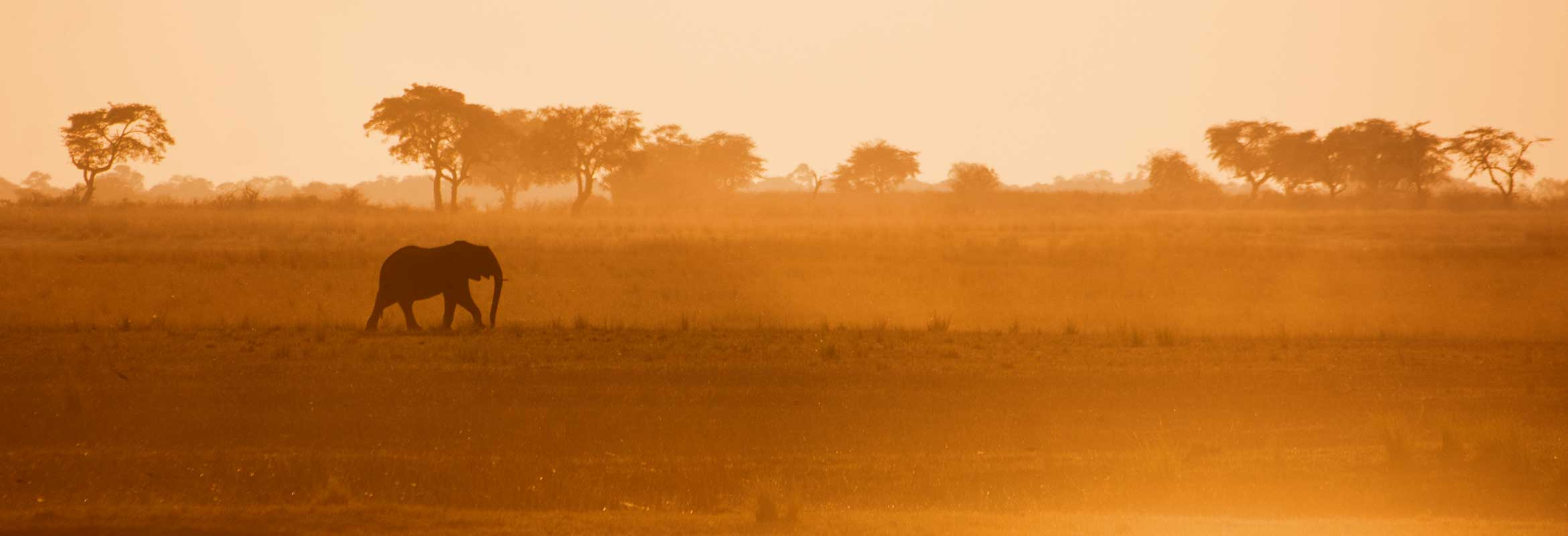 Where To Go On Safari | Our Guide To The Best Safari