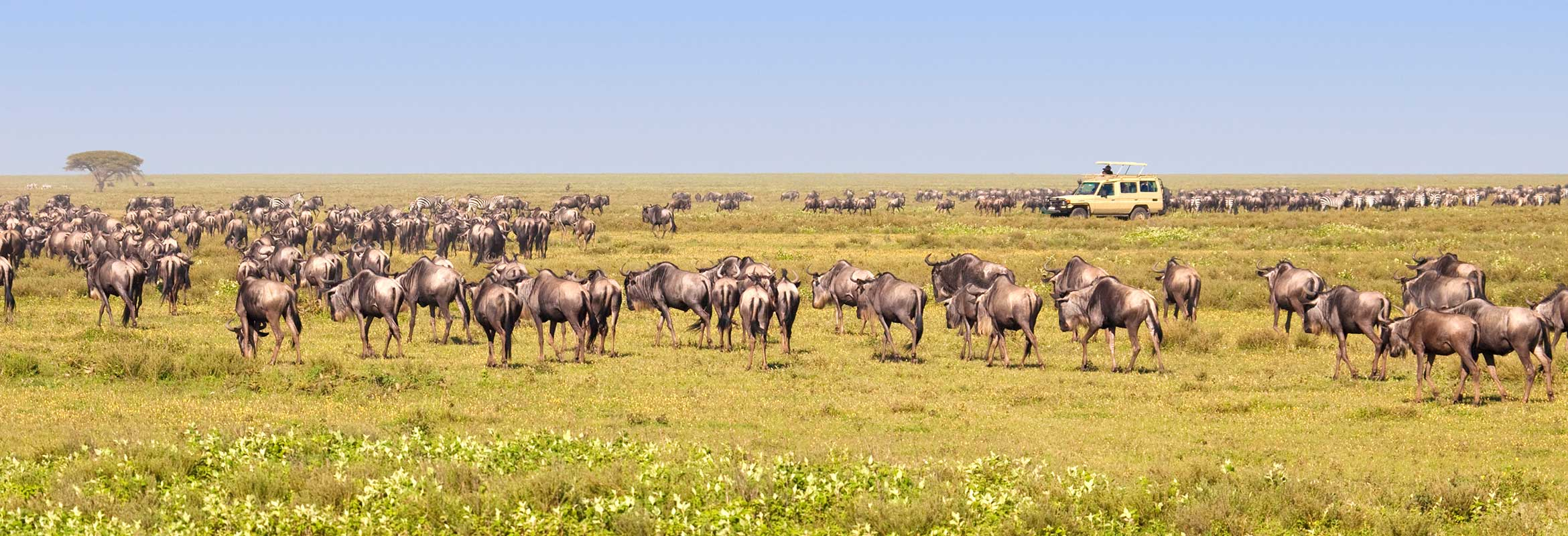 Escorted Small Group Safaris
