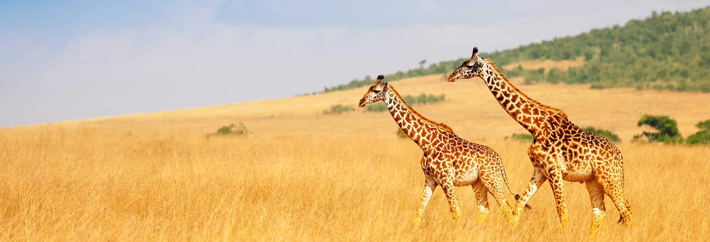 When To Go On Safari Best Months For Safaris Kuoni Travel