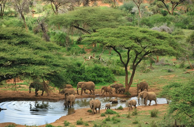 Elephants at a watering hole
