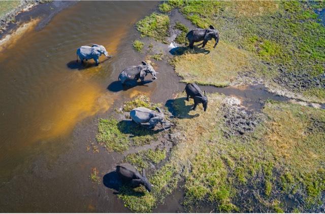 Botswana Safari & Victoria Falls