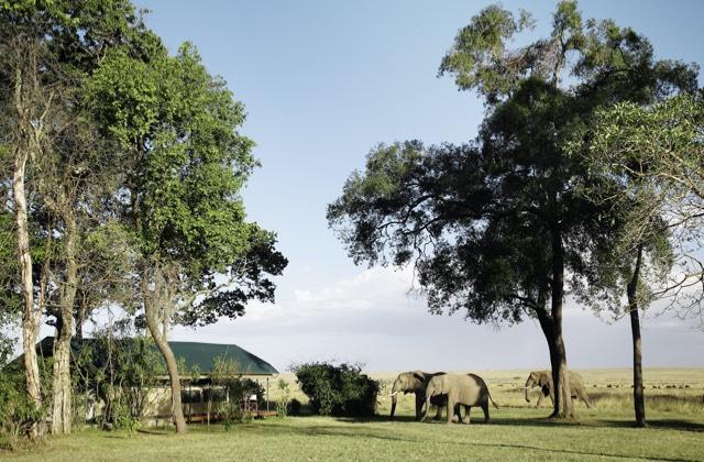 Governors' Safari