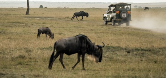 Under the radar safaris